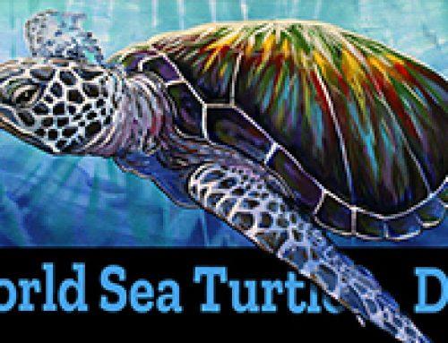 World Sea Turtle Day June 16